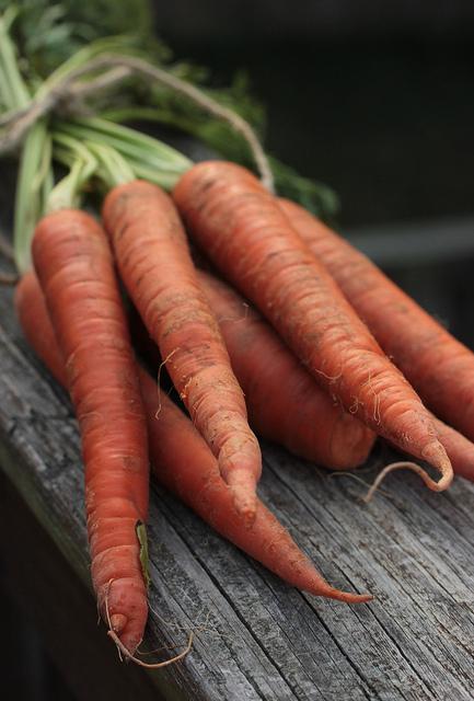 seminte de morcovi